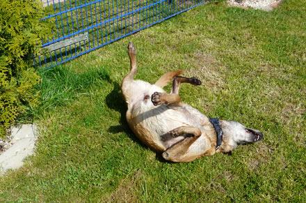 Hundepension und Hundeschule Trapp & Bossert in Neupotz bei Karlsruhe